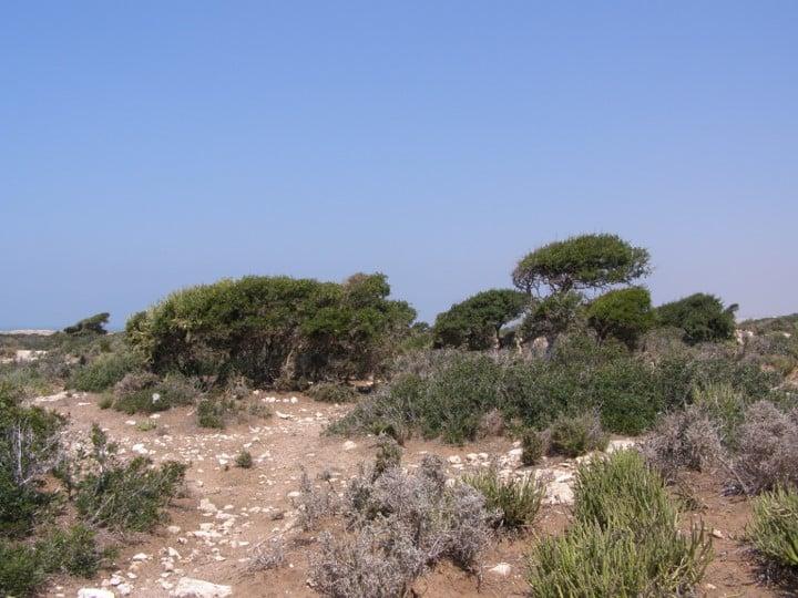 Aspect al habitatului întâlnit la Sidi Kaouki - Cap Sim (una dintre stațiile expediției)